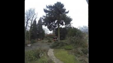 Time Lapse Felling - Tree Surgeons Sevenoaks, Kent UK
